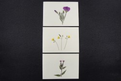 Flower cards  with dried wild  plants by NORA - rectangular on carton