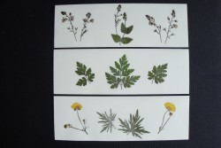 Flower cards with dried wild plants by NORA - rectangular